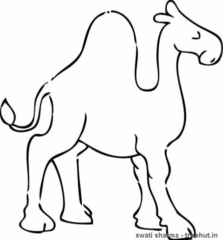Camel Coloring Pages 1 Treehut In Camel Coloring Page