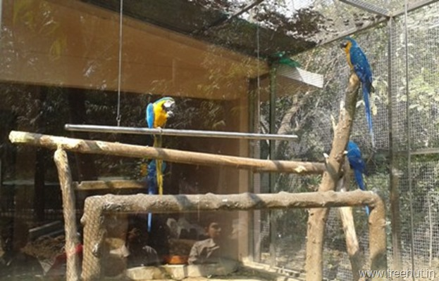 Colored parrots at Lucknow zoo
