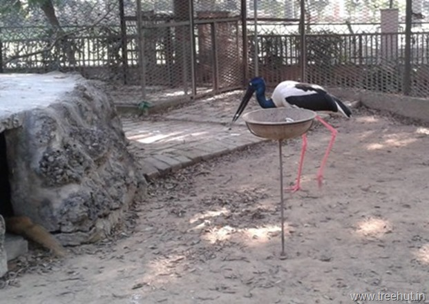 stork at lucknow zoo