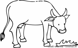 Cow eating grass coloring page
