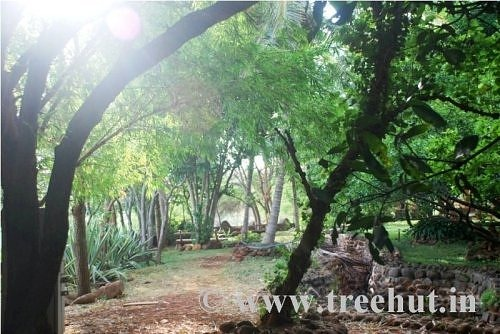 Trees in Art of Living Ashram Bangalore