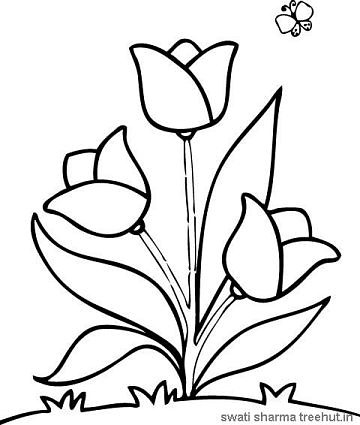 tulips flowers coloring pages