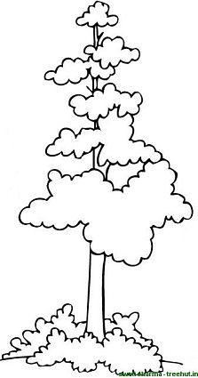 Indian sal tree coloring page