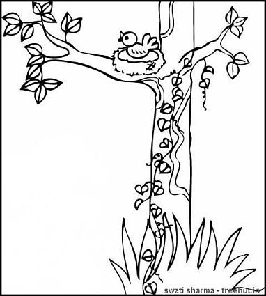 bird nest on tree coloring page