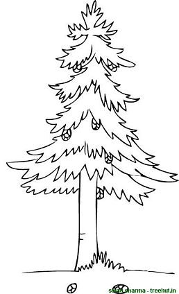 pine cone on tree coloring page