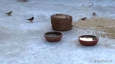 north india sparrows food and water Chaitanya Tewari India Lucknow