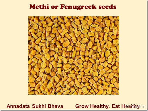 How to grow Methi, Fenugreek in a pot (3)