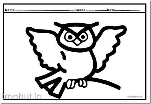 Owl, Nocturnal Birds Coloring Pages (3)