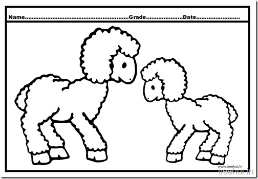sheep coloring pages (2)