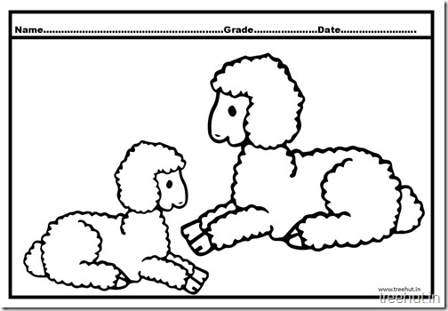 sheep coloring pages (3)