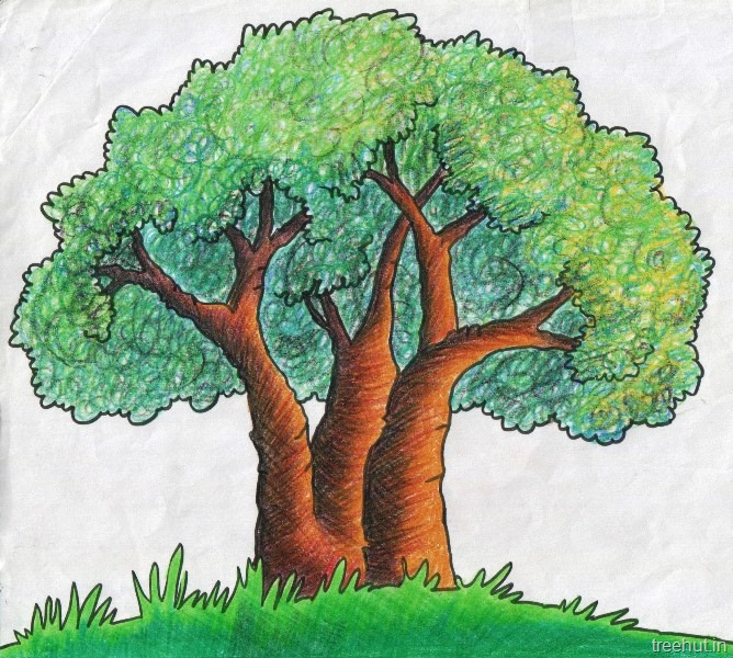 tree shading techniques with crayons