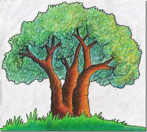 Tree Shading Technique with Crayons