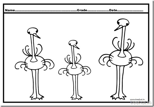 Ostrich Coloring Pages (1)