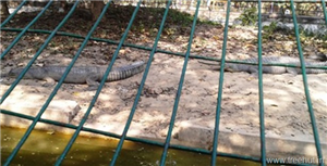 The Lucknow Zoo